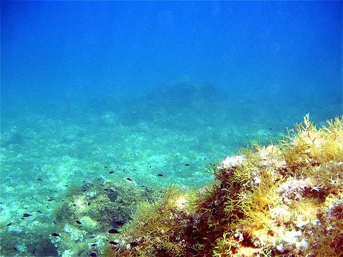Submarinismo en Croacia